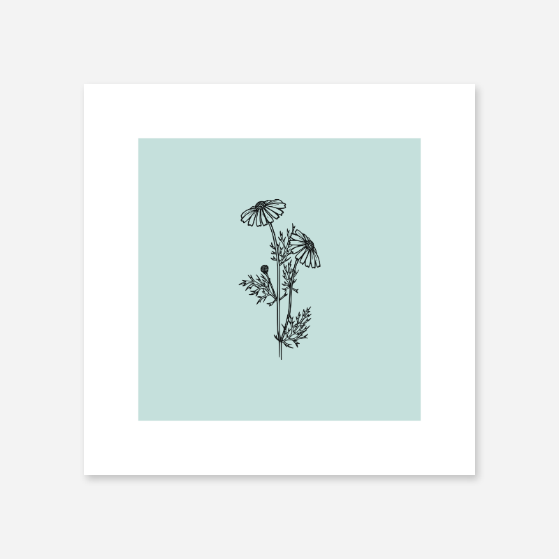 Black flower plant camomile line drawing with light teal background design to print at home