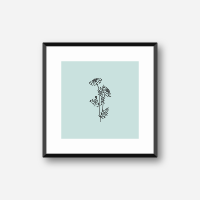 Black flower plant camomile line drawing with light teal background design to print at home , digital print